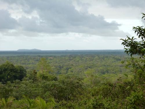 Guyane, Forêt équatoriale
