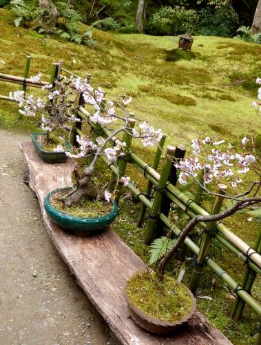 Arashiyama, Gio-ji,jardin, mousses