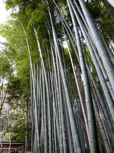 Arashiyama, Gio-ji,jardin, mousses,bambous