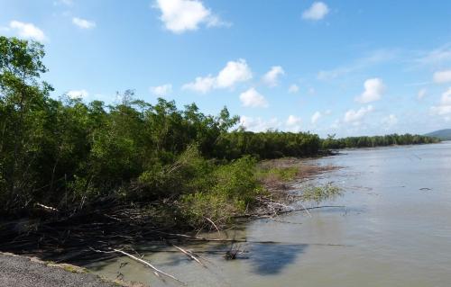 Guyane, Cayenne,mangrove