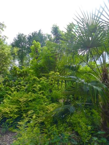 jardin,Bellême,Sérigny,Bois,puits