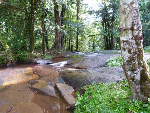 Guyane, Fourgassier