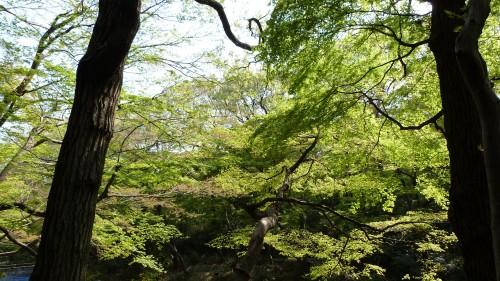 Japon,Tokyo,Meiji-jingu,Yoyogi,park