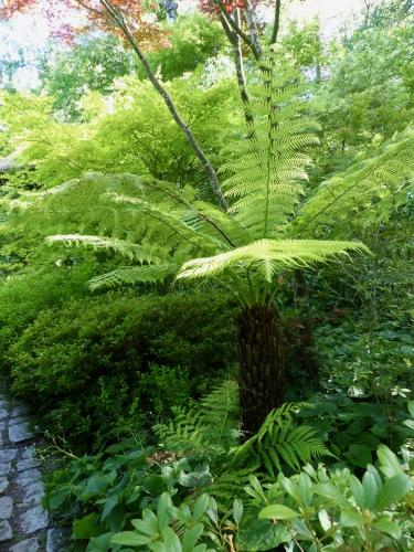 jardin, Petit Bordeaux,Sarthe, caractère,fougères arborescentes